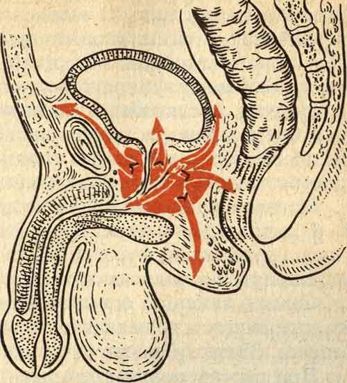 Флебологи в саратове отзывы