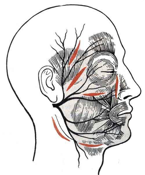 Разрезы на лице при вскрытии флегмон и абсцессов